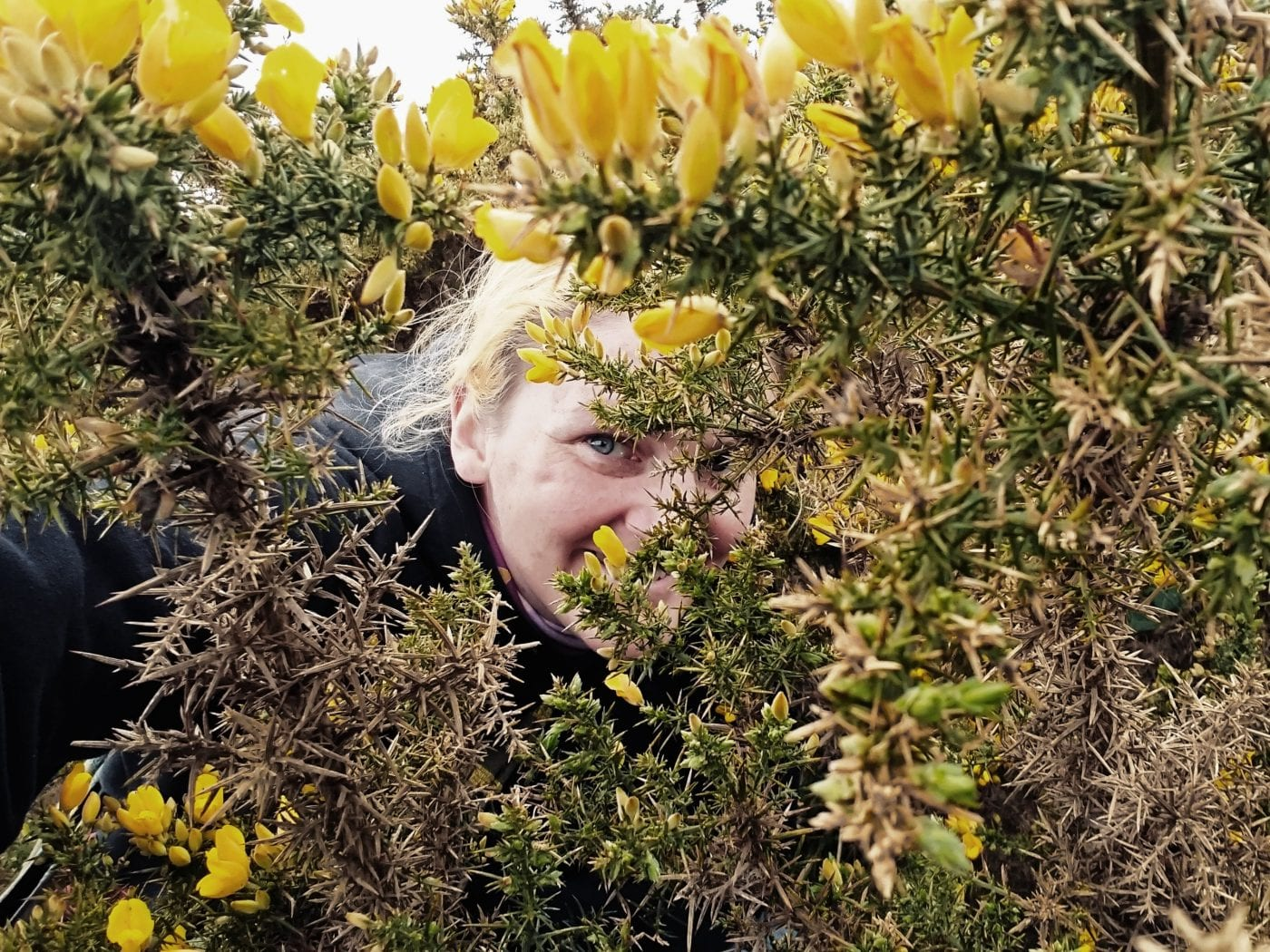 Blonde lady peeking through a gorse bush ad smiling. Featured image for the post Kind of like vanilla but not quite.
